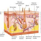 Процедуры для восстановления механических свойств кожи человека